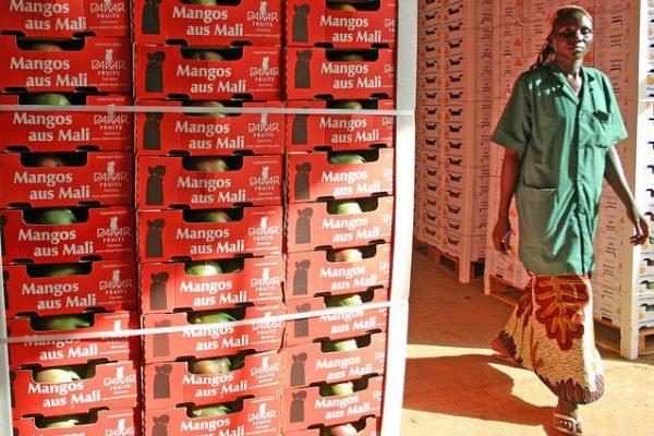 AOM Mango Processing Plant - Mali/ Value Chains - Photo: USAID