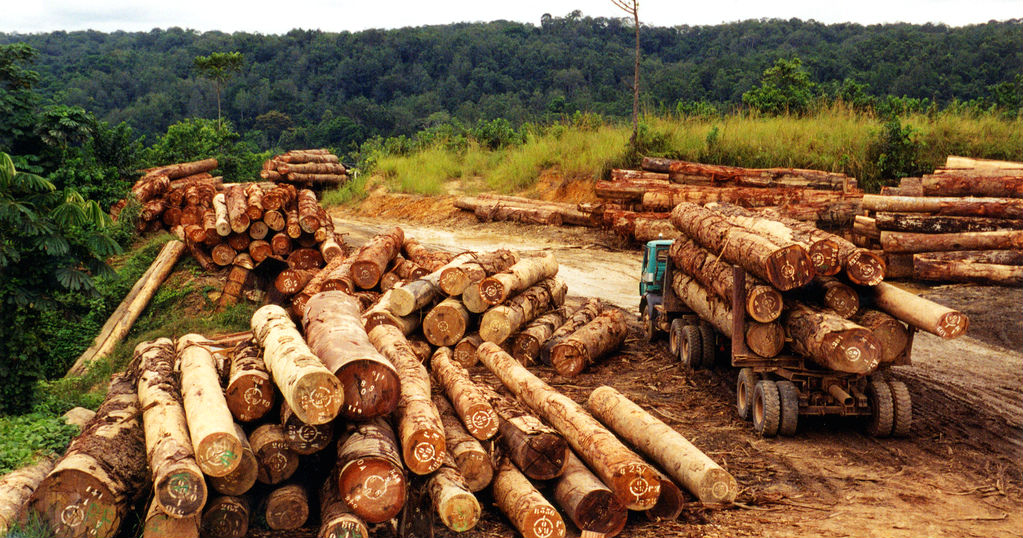 effect of illegal logging