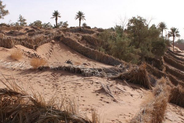 Desertification Management in Tinfu, Morocco