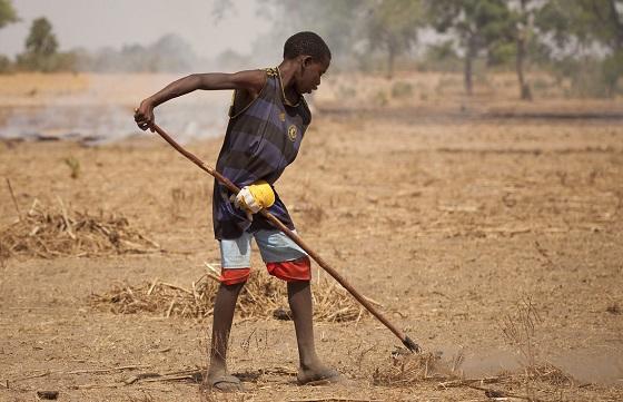 Tilling soil in Senegal. Photo: IFPRI/Milo Mitchell