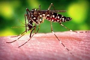 mosquito_zika