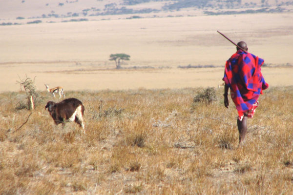 A Maasai man in the Eastern Serengeti