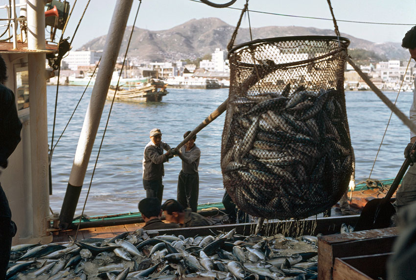 Fishermen unload their catch of mackerel at a fish market. (UN Photo/M Guthrie)