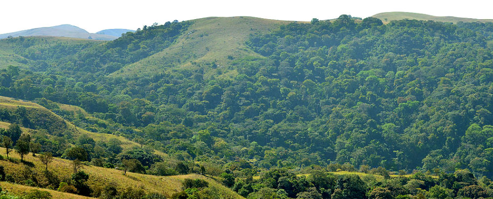 The Ngel Nyaki Forest Reserve in Taraba State, Nigeria. (Photo: Matt-W NZ)