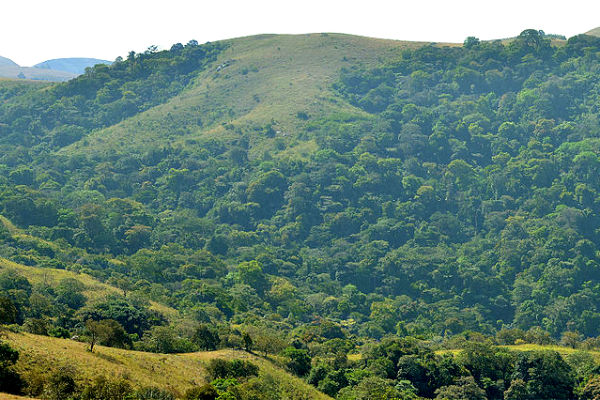 How China Fuels Deforestation In Nigeria, West Africa