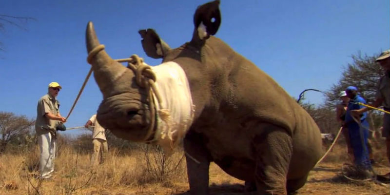 Tipping Point Transnational Organized Crime and the War on Poaching Part 1