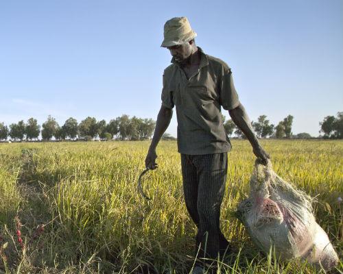 A Malian farme