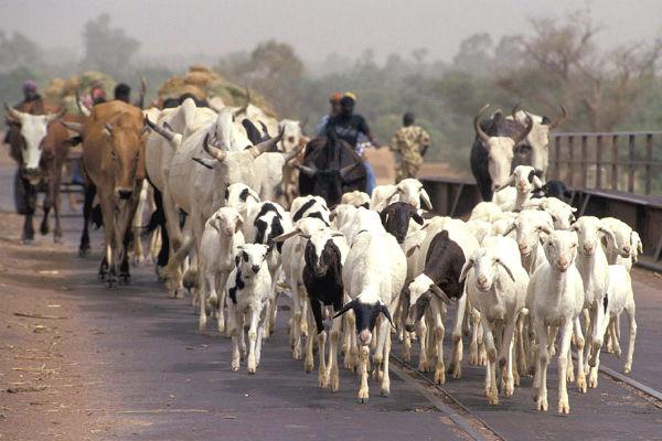 Réduire la violence entre agriculteurs et éleveurs au Mali