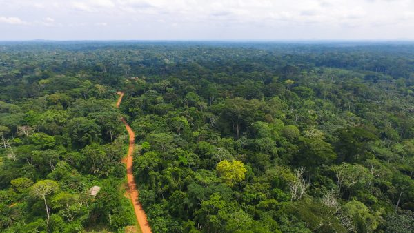 Aerial view of a forest in Cameroon.