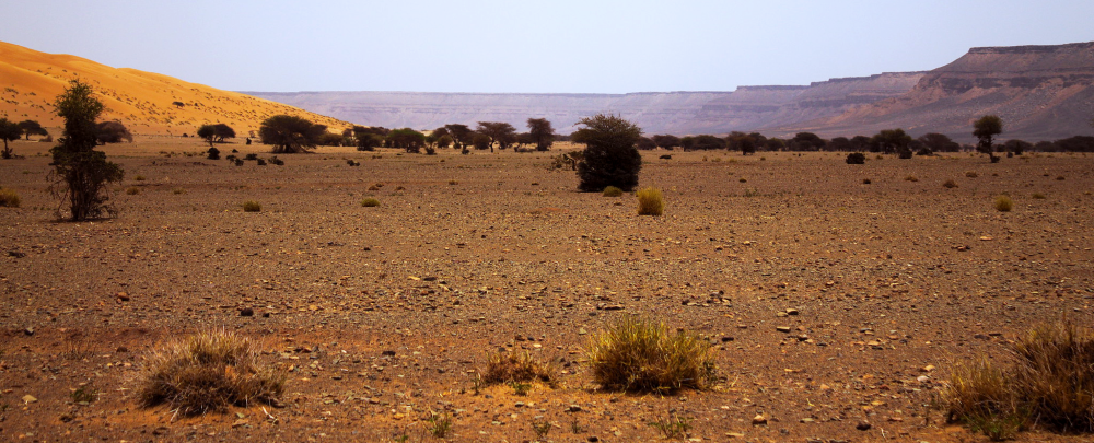 The Mauritanian desert
