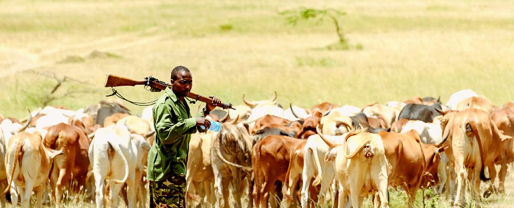 A herder and his cattle.